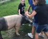kids petting a pig